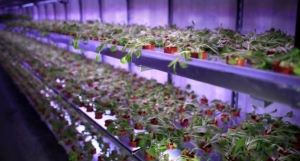 Hydroponics a promising technology to boost food supply