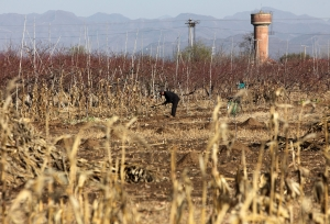 Soil pollution to have grave consequences for China